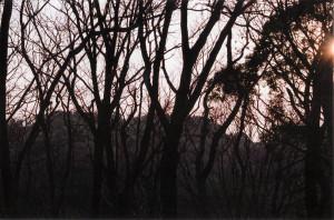 picture_film_03