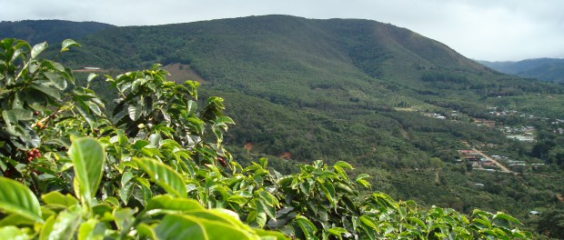 Coffee-farm-costa-rica