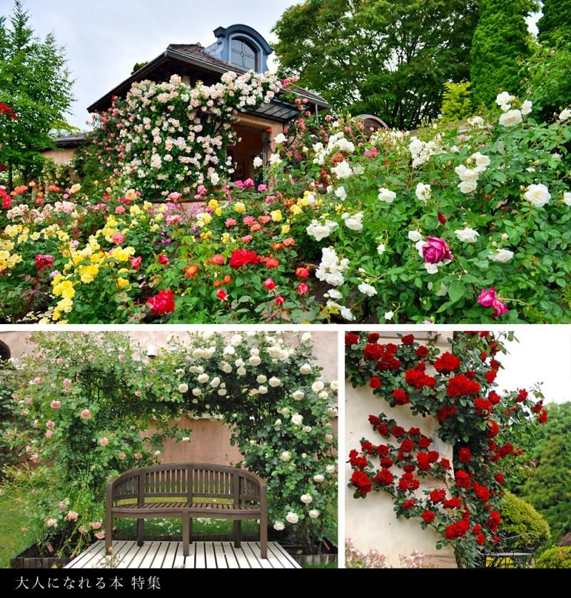 kawaguchiko_roses3