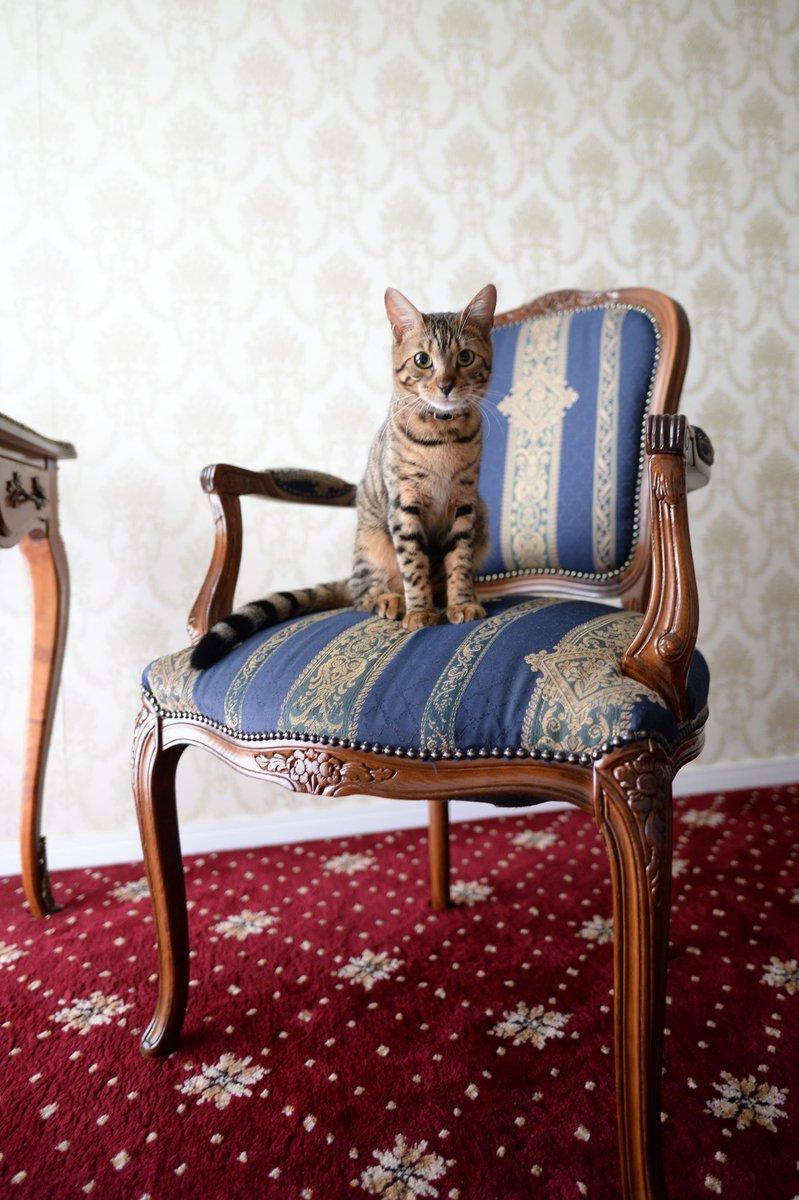 【実体験】猫の知能は本当に高いのか?