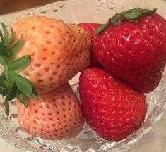 淡い桜色の白イチゴ「淡雪(Awayuki)」の味と香り
